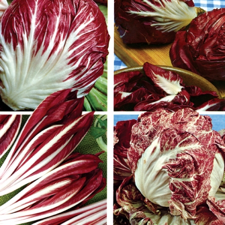 CHICORY ITALIANO MIXED