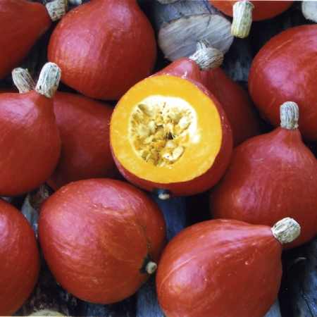 onion squash squash red kuri seeds marrow squash pumpkins. Black Bedroom Furniture Sets. Home Design Ideas