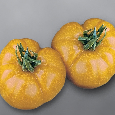 Tomato Seeds | TOMATO BRANDYWINE YELLOW | Large Yellow ...
