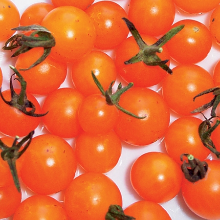 TOMATO CURRANT GOLDRUSH