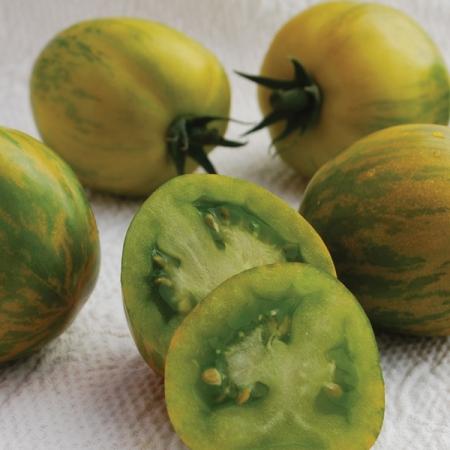 Green Zebra Tomato Plant
