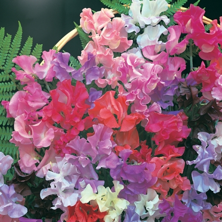 SWEET PEA SCENTED BOUQUET