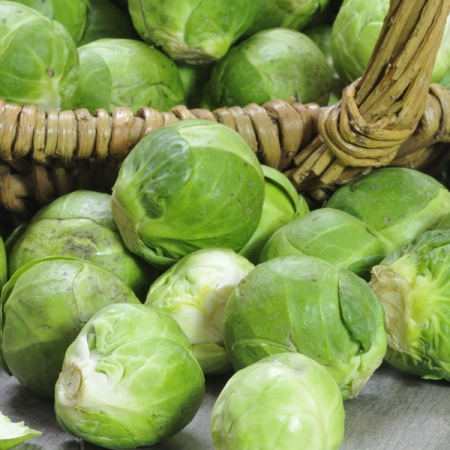 BRUSSELS SPROUT BRILLIANT F1