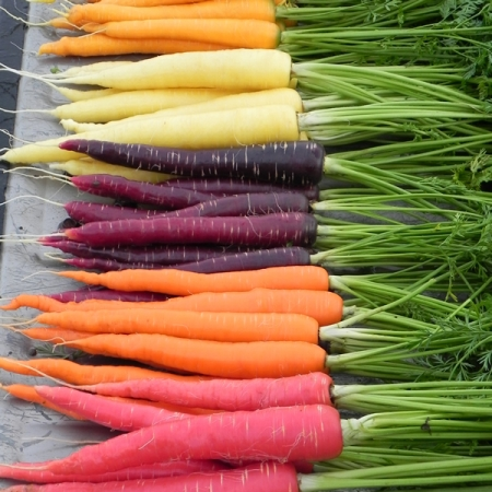CARROT RAINBOW IMPROVED MIXED