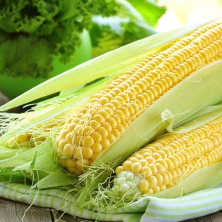 SWEET CORN SUGAR SWEET F1