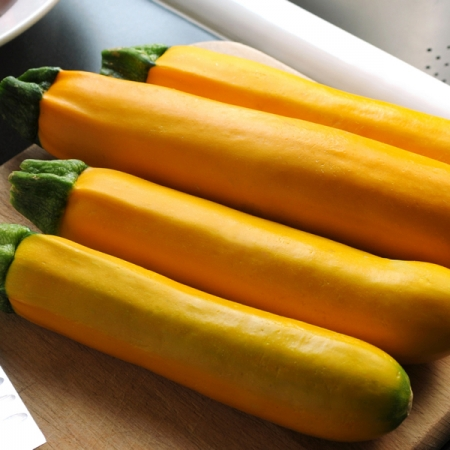 COURGETTE EASY PICK GOLD F1