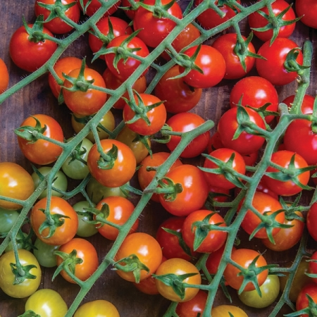 Tomato cherry baby seeds a z for How to grow cherry tomatoes from seeds