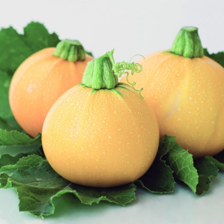 COURGETTE YELLOW BALL F1