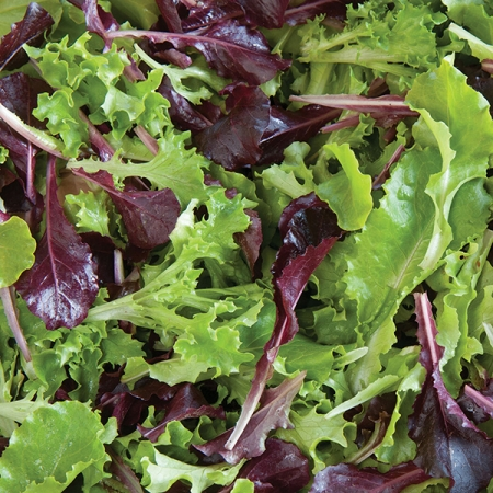 LETTUCE FIVE STAR GREENHOUSE MIX
