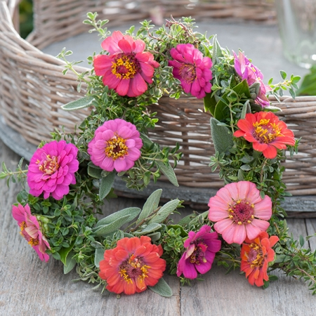 ZINNIA CUT AND COME AGAIN PASTEL MIXED