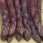 ASPARAGUS PACIFIC PURPLE