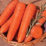 CARROT GIANT FLAKKEE