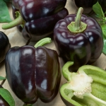 PEPPER ROYAL PURPLE MAVRAS