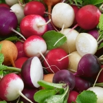 RADISH MILANO MIXED