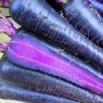 CARROT PURPLE HYBRID F1
