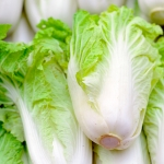 CHINESE CABBAGE STUMPY