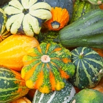 GOURDS DECORATIVE MIXED
