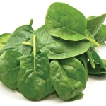 SPINACH VIOLIN F1