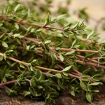 OLD ENGLISH THYME