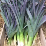 LEEK NORTHERN LIGHTS F1