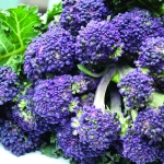 BROCCOLI SUMMER PURPLE