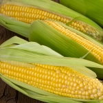 SWEET CORN GOLDEN GATE