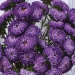 ASTER TOWER BLUE