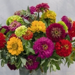 ZINNIA FLORIST SUMMER BOUQUET MIXED F1