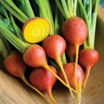 BEETROOT TOUCHSTONE GOLD