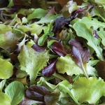 LETTUCE ALL STAR GOURMET SALAD LEAVES