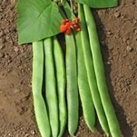 RUNNER BEAN ACHIEVEMENT