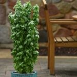 BASIL EMERALD TOWER