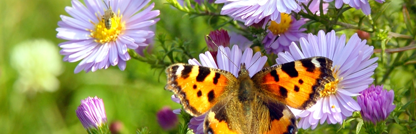 Genial Attract Birds, Bees, Butterflies And Other Beneficial Pollinators To Your  Garden With These Bee Friendly Flowers And Plants.
